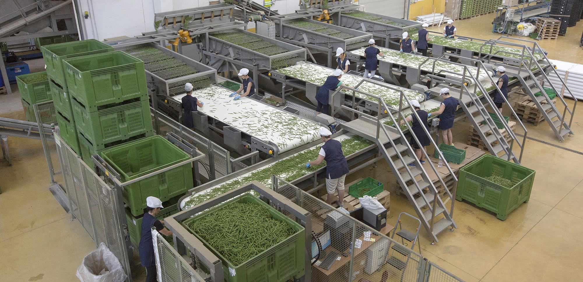 grilli clarice produzione e vendita fagiolini azienda
